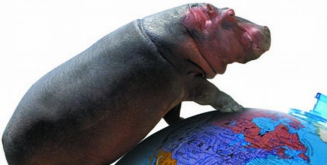 HIPPO-WORLD
